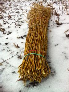Заготовка ивовых прутьев ранней весной
